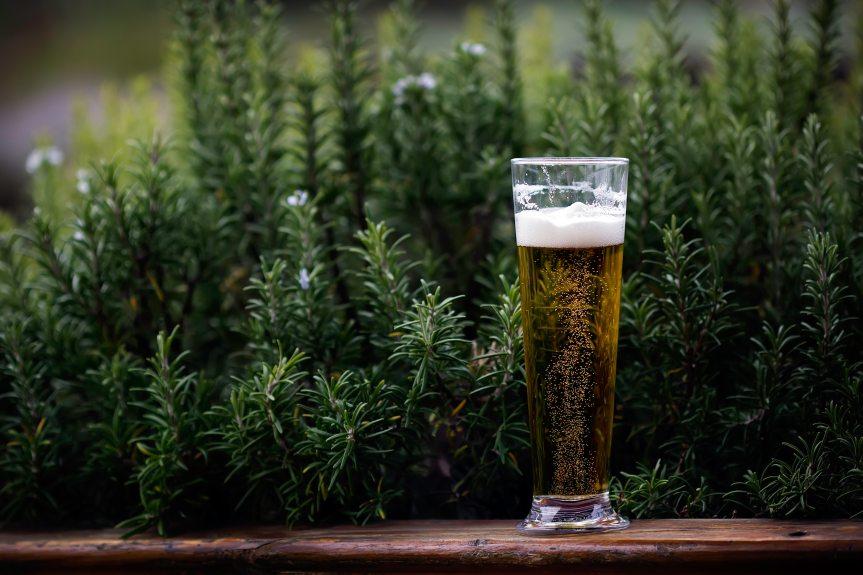 alcohol-beer-beverage-995686